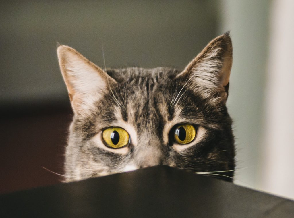 Ten top tips for reducing stress for cats visiting the vet